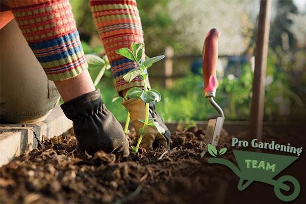 pro-gardening-team